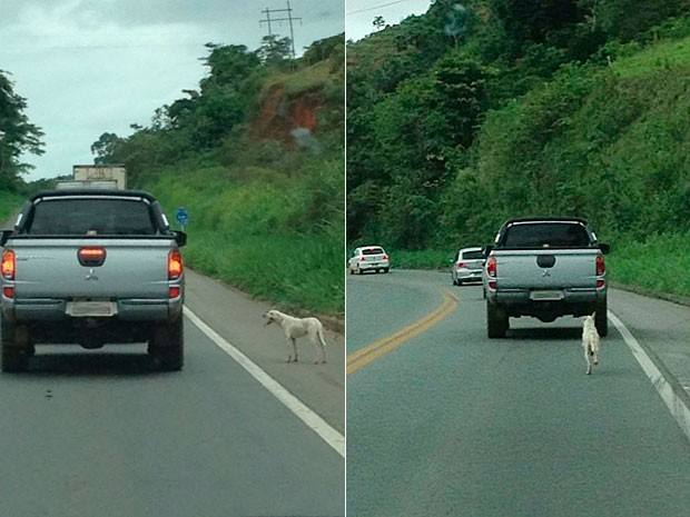 Carro é flagrado abandonando cachorro em estrada.